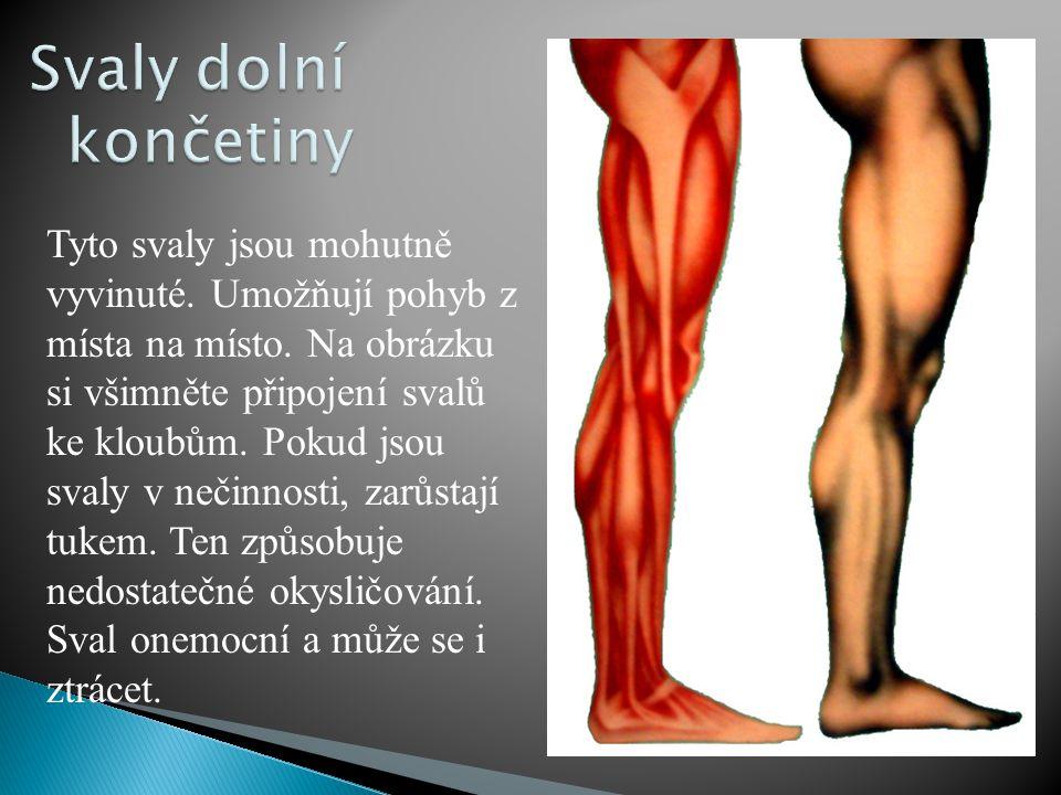 Při pohybu se svaly připojené na kostru postupně natahují a smršťují.
