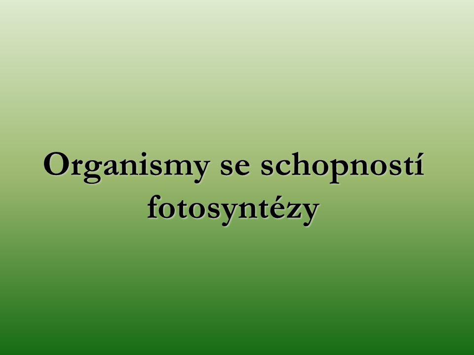 Organismy se schopností fotosyntézy