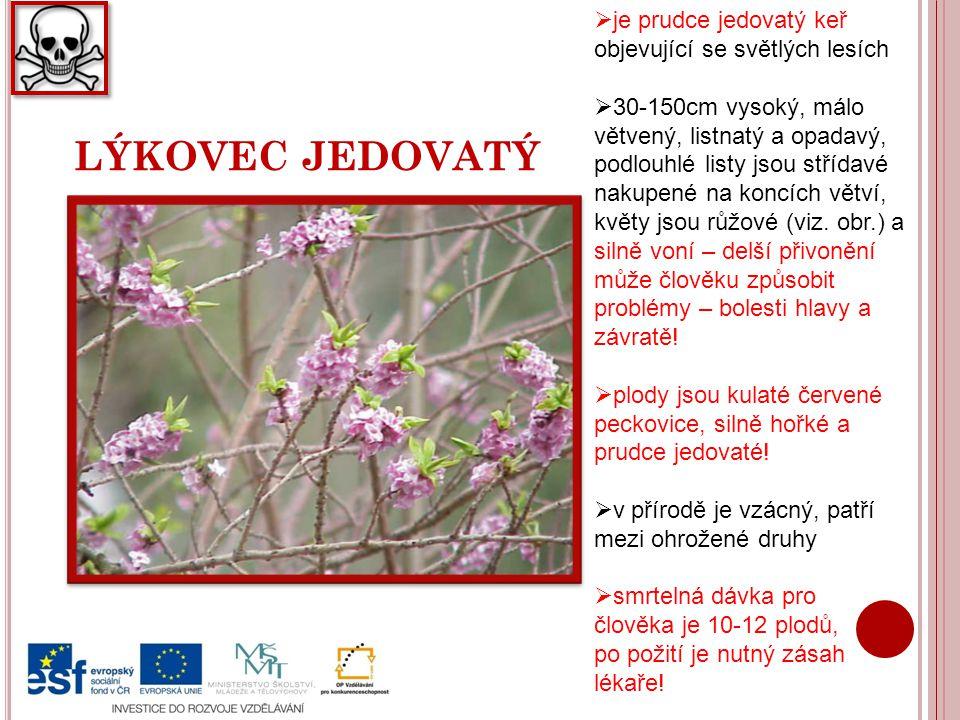 K ONVALINKA VONNÁ  je vytrvalá jedovatá rostlina rozšířená po celé Evropě rostoucí ve světlých lesích  pěstuje se také jako okrasná, byly vyšlechtěny různobarevné odrůdy  je až 20cm vysoká s plazivým oddenkem, dva jednoduché listy, bílé, voňavé květy rostou v hroznu na přímém stvolu, plodem jsou jedovaté jasně červené bobule  k otravě dochází po požití stonků či listů nebo pojídání plodů, i vypití vody z vázy je nebezpečné, příznaky otravy jsou nevolnost, zažívací obtíže, křeče atd.
