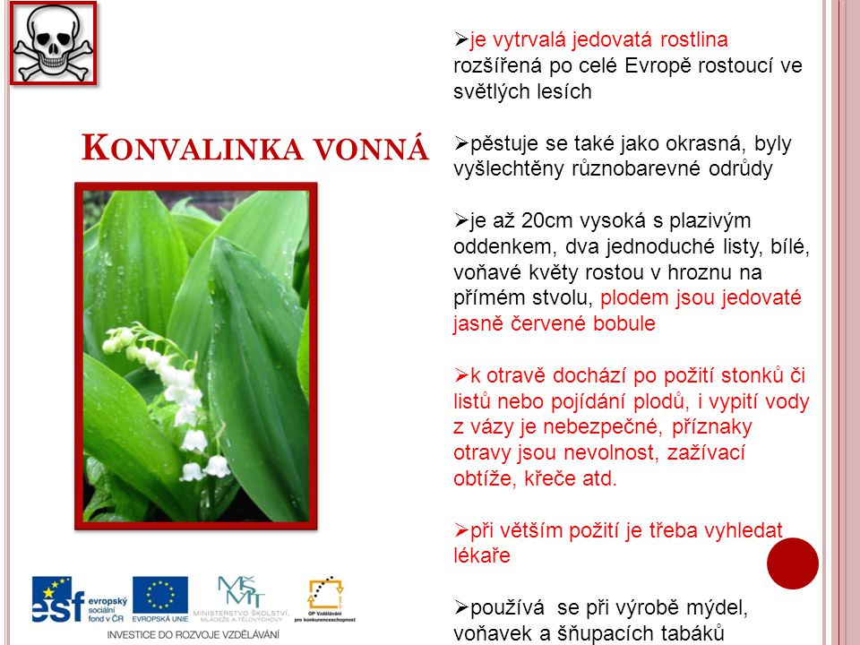 K ONVALINKA VONNÁ  je vytrvalá jedovatá rostlina rozšířená po celé Evropě rostoucí ve světlých lesích  pěstuje se také jako okrasná, byly vyšlechtěn