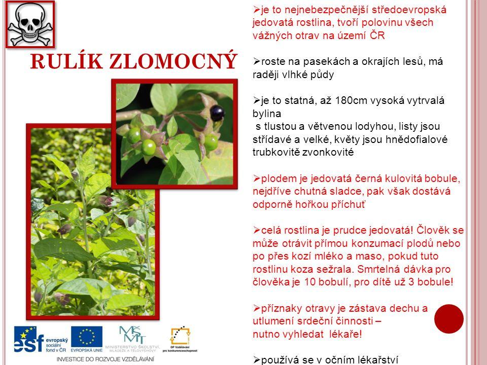 RULÍK ZLOMOCNÝ  je to nejnebezpečnější středoevropská jedovatá rostlina, tvoří polovinu všech vážných otrav na území ČR  roste na pasekách a okrajíc