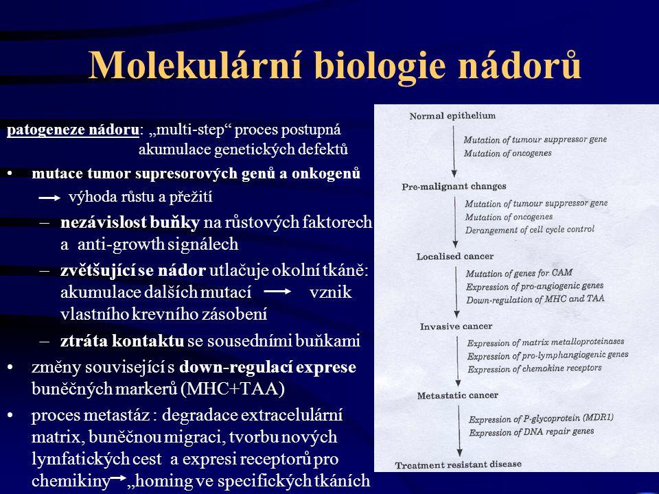 """Molekulární biologie nádorů patogeneze nádoru: """"multi-step proces postupná akumulace genetických defektů mutace tumor supresorových genů a onkogenů výhoda růstu a přežití –nezávislost buňky na růstových faktorech a anti-growth signálech –zvětšující se nádor utlačuje okolní tkáně: akumulace dalších mutací vznik vlastního krevního zásobení –ztráta kontaktu se sousedními buňkami změny související s down-regulací exprese buněčných markerů (MHC+TAA) proces metastáz : degradace extracelulární matrix, buněčnou migraci, tvorbu nových lymfatických cest a expresi receptorů pro chemikiny """"homing ve specifických tkáních"""