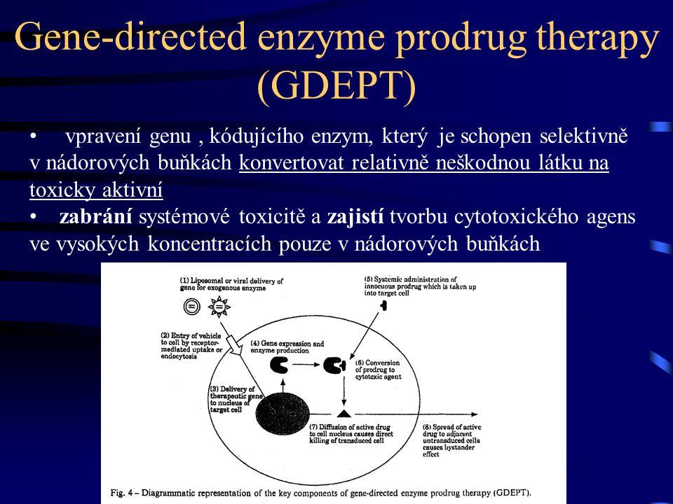 Gene-directed enzyme prodrug therapy (GDEPT) vpravení genu, kódujícího enzym, který je schopen selektivně v nádorových buňkách konvertovat relativně neškodnou látku na toxicky aktivní zabrání systémové toxicitě a zajistí tvorbu cytotoxického agens ve vysokých koncentracích pouze v nádorových buňkách