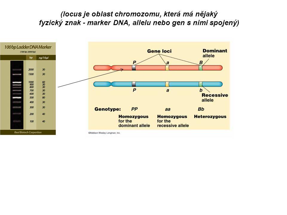 (locus je oblast chromozomu, která má nějaký fyzický znak - marker DNA, allelu nebo gen s nimi spojený)