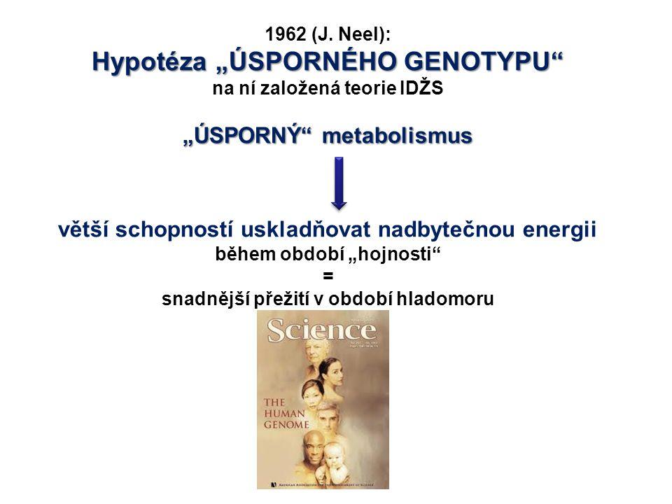 """1962 (J. Neel): Hypotéza """"ÚSPORNÉHO GENOTYPU"""" na ní založená teorie IDŽS """"ÚSPORNÝ"""" metabolismus větší schopností uskladňovat nadbytečnou energii během"""