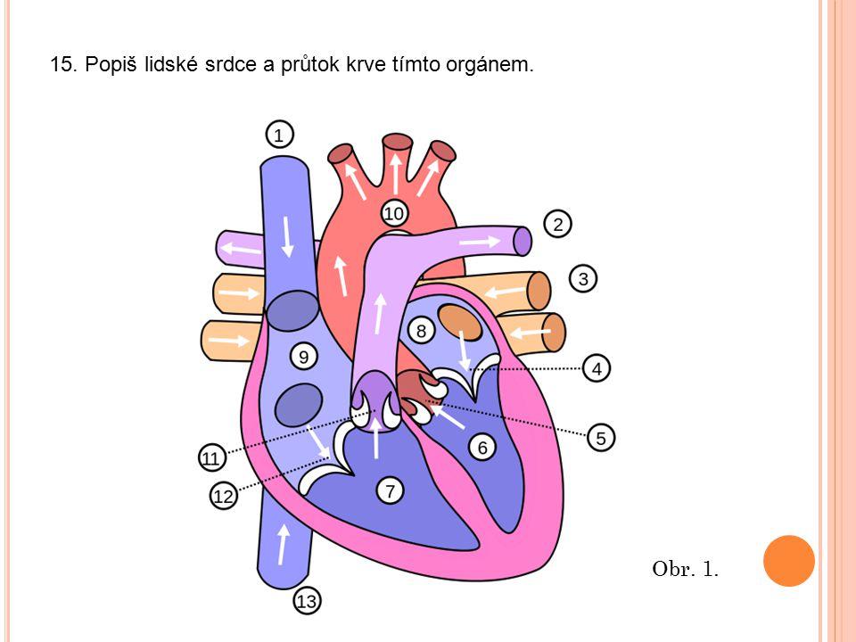 15. Popiš lidské srdce a průtok krve tímto orgánem. Obr. 1.