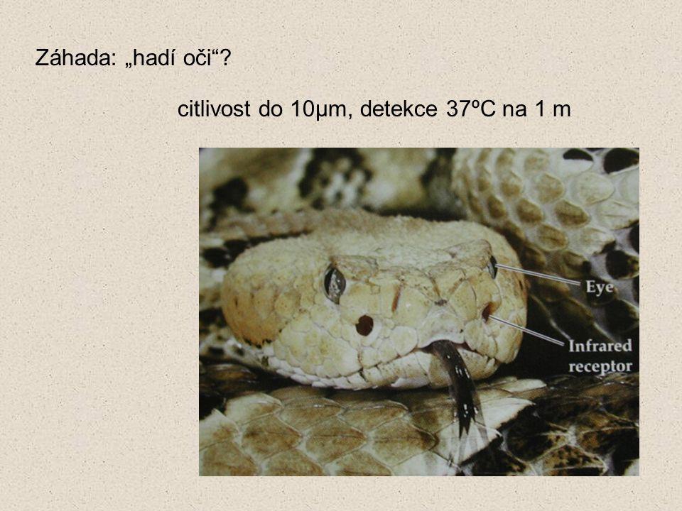 """Záhada: """"hadí oči citlivost do 10μm, detekce 37ºC na 1 m"""