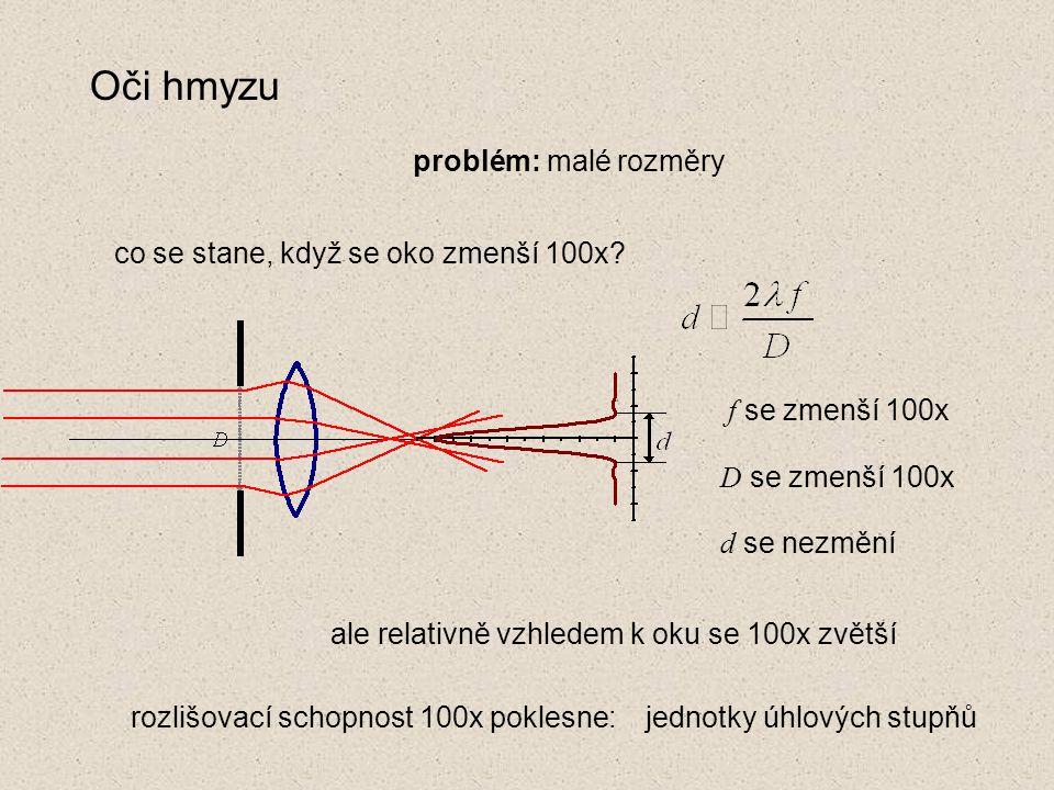 Oči hmyzu problém: malé rozměry co se stane, když se oko zmenší 100x.