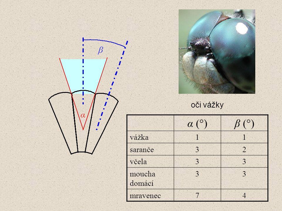 α (°)α (°)β (°)β (°) vážka11 saranče32 včela33 moucha domácí 33 mravenec74 oči vážky