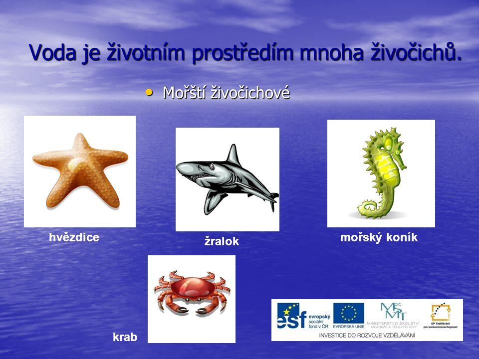 Voda je životním prostředím mnoha živočichů. Mořští živočichové Mořští živočichové hvězdice žralok mořský koník krab