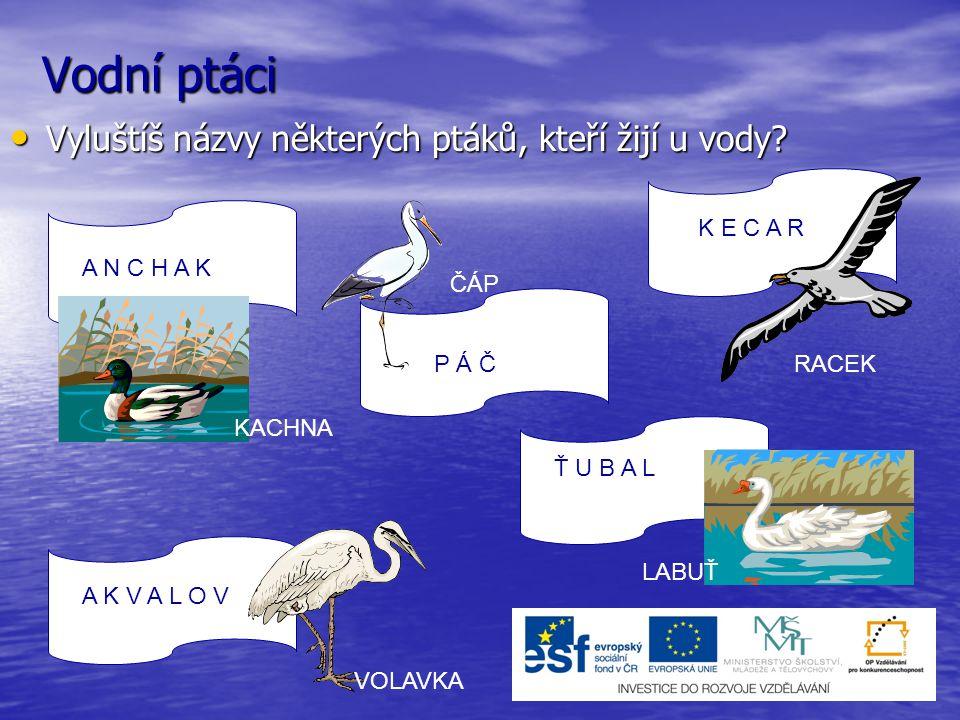 Vodní ptáci Vyluštíš názvy některých ptáků, kteří žijí u vody? Vyluštíš názvy některých ptáků, kteří žijí u vody? A N C H A K P Á Č Ť U B A L K E C A