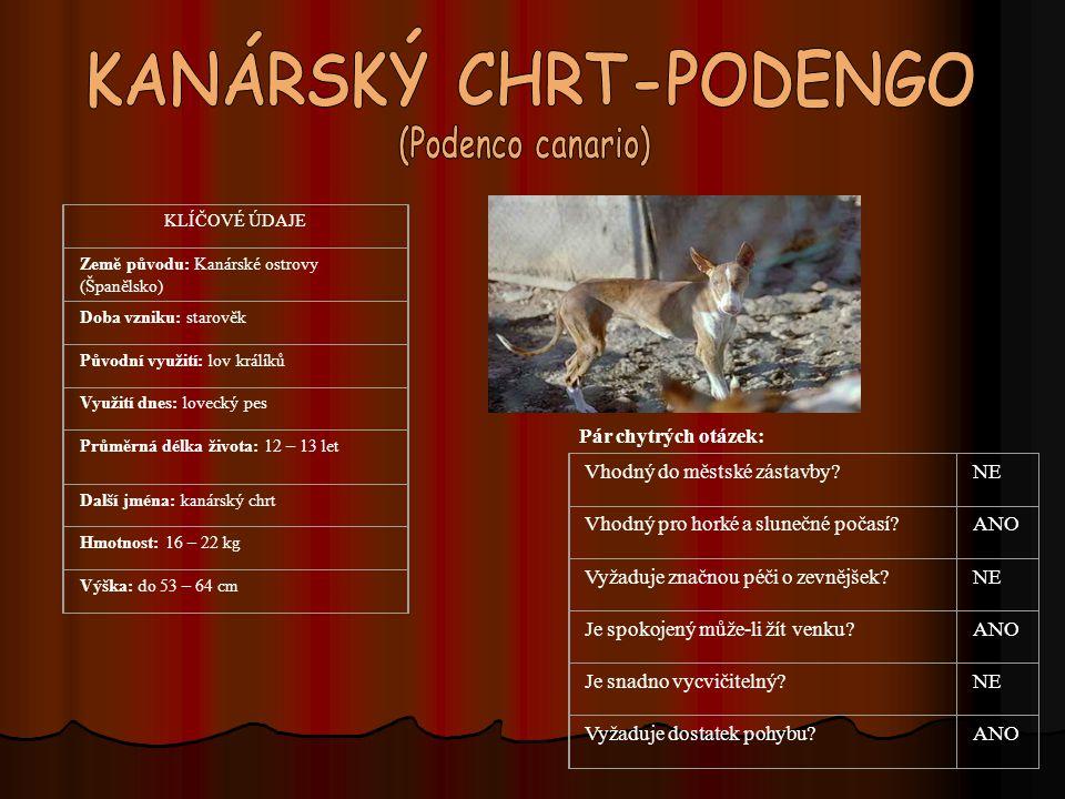 KLÍČOVÉ ÚDAJE Země původu: Kanárské ostrovy (Španělsko) Doba vzniku: starověk Původní využití: lov králíků Využití dnes: lovecký pes Průměrná délka ži