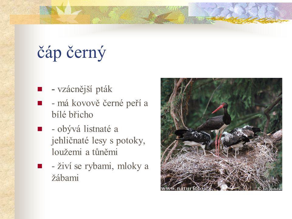 čáp černý - vzácnější pták - má kovově černé peří a bílé břicho - obývá listnaté a jehličnaté lesy s potoky, loužemi a tůněmi - živí se rybami, mloky a žábami