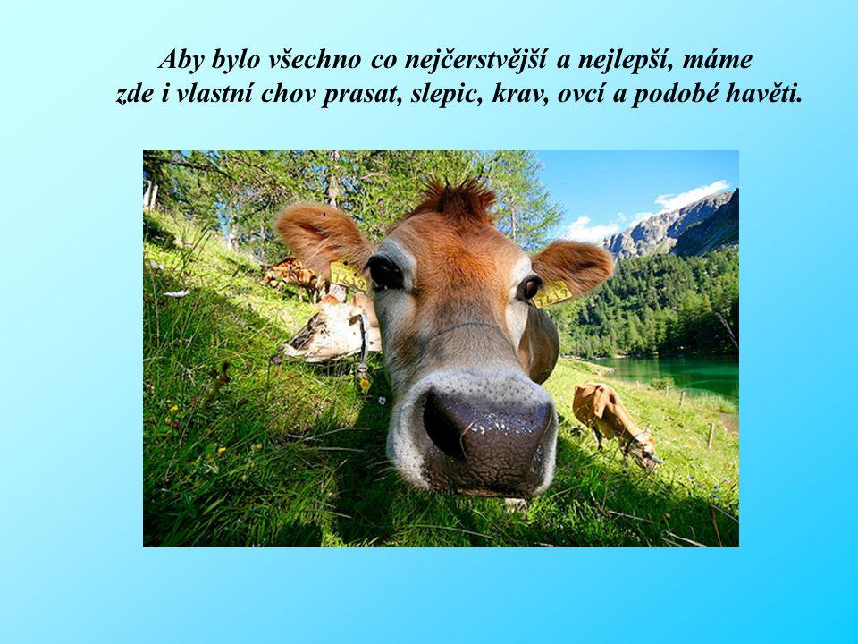 Aby bylo všechno co nejčerstvější a nejlepší, máme zde i vlastní chov prasat, slepic, krav, ovcí a podobé havěti.
