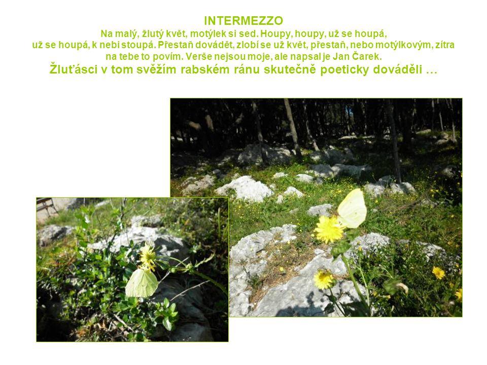 INTERMEZZO Na malý, žlutý květ, motýlek si sed.