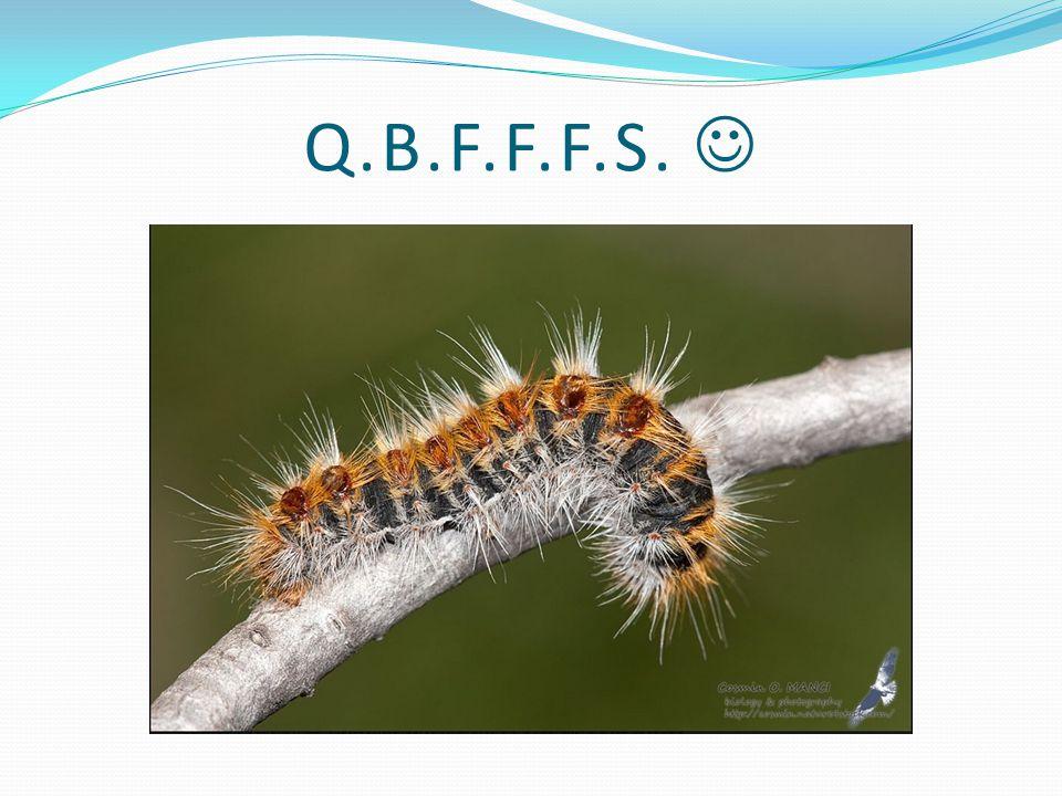 Q.B.F.F.F.S.