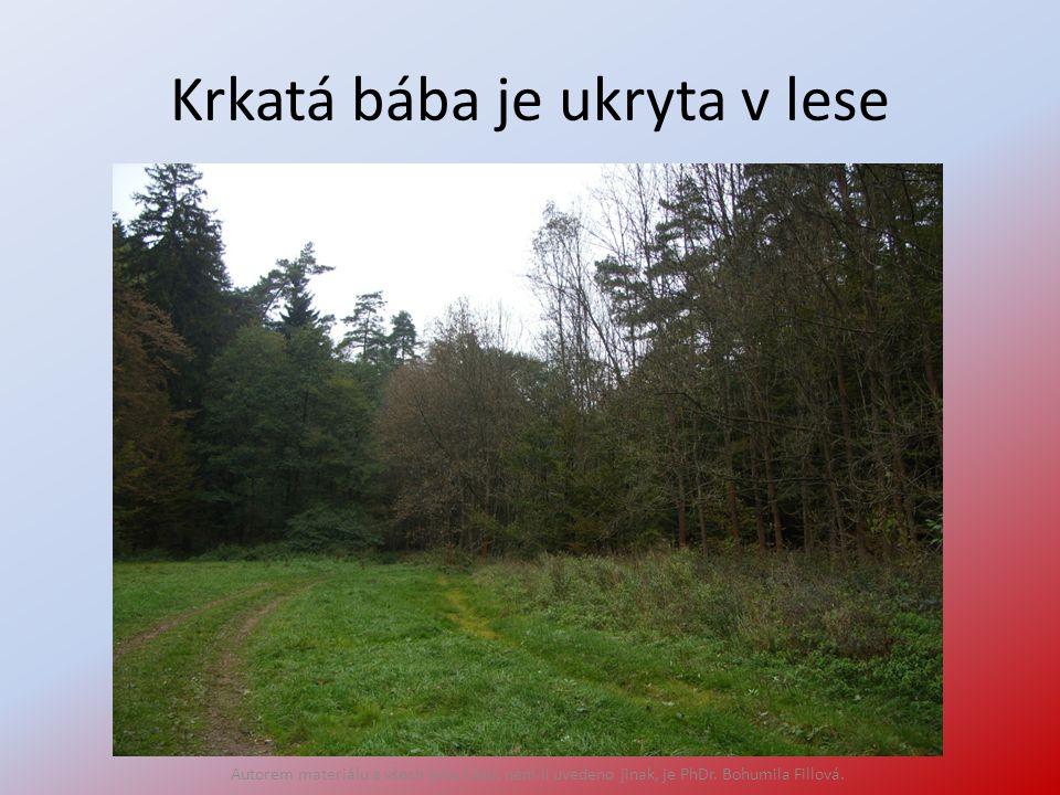 Krkatá bába je ukryta v lese Autorem materiálu a všech jeho částí, není-li uvedeno jinak, je PhDr.