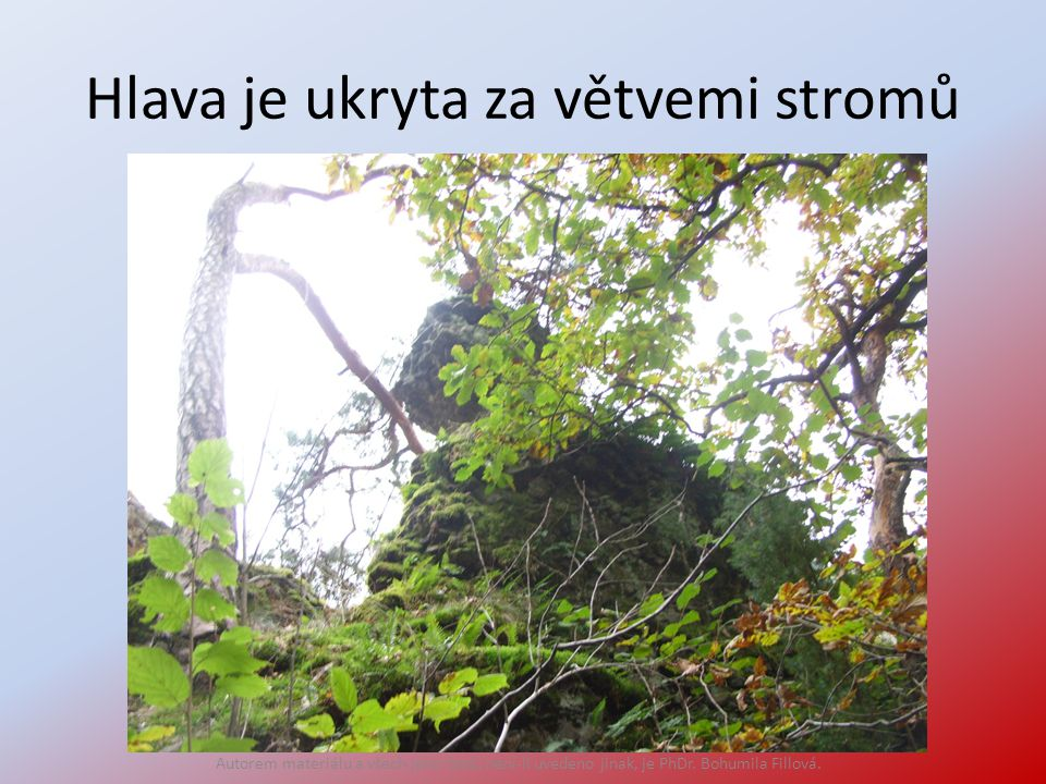 Hlava je ukryta za větvemi stromů Autorem materiálu a všech jeho částí, není-li uvedeno jinak, je PhDr. Bohumila Fillová.