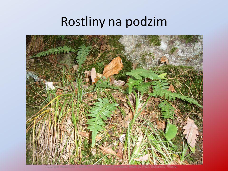 Rostliny na podzim Autorem materiálu a všech jeho částí, není-li uvedeno jinak, je PhDr. Bohumila Fillová.