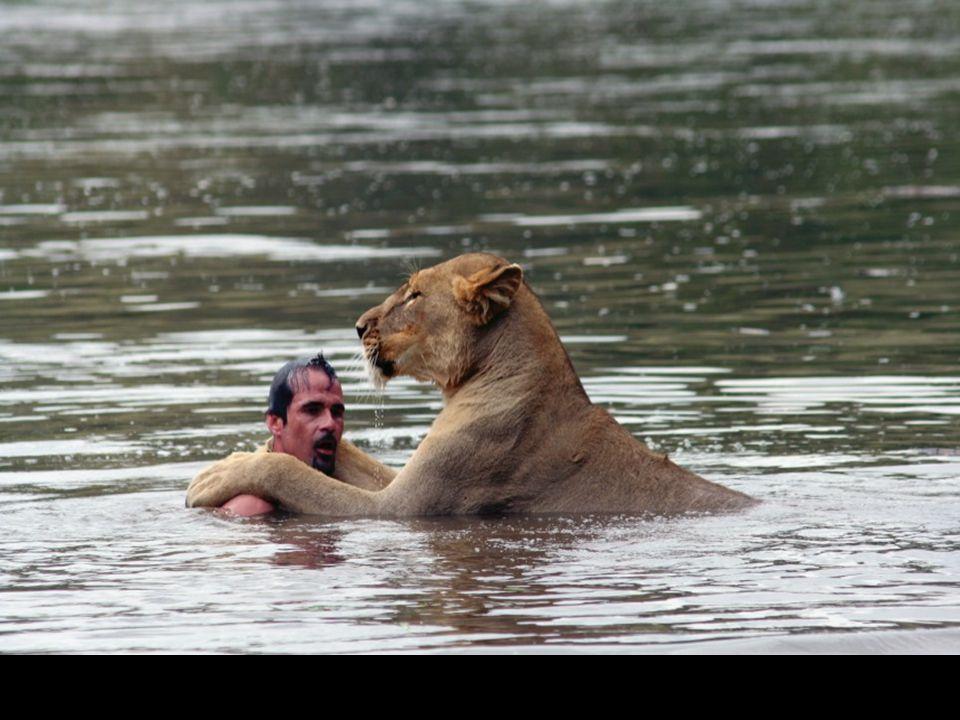 Tato lvice nemá moc ráda vodu, ale pokud se jí přítel zeptá… není pochyb a objetí napoví vše…