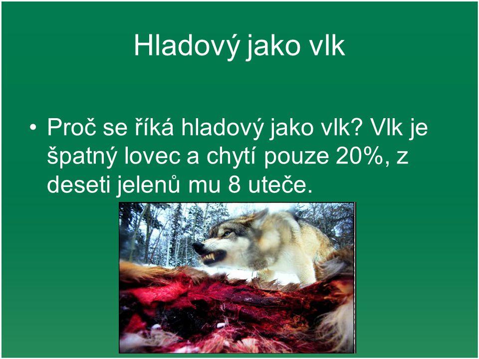 Hladový jako vlk Proč se říká hladový jako vlk? Vlk je špatný lovec a chytí pouze 20%, z deseti jelenů mu 8 uteče.