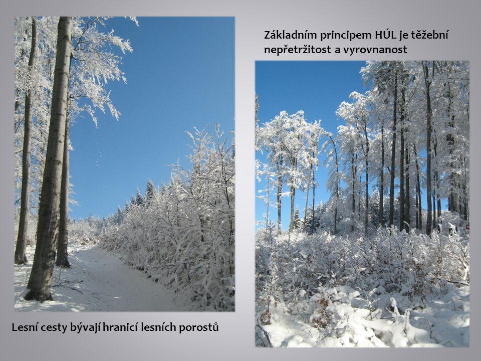 Lesní cesty bývají hranicí lesních porostů Základním principem HÚL je těžební nepřetržitost a vyrovnanost