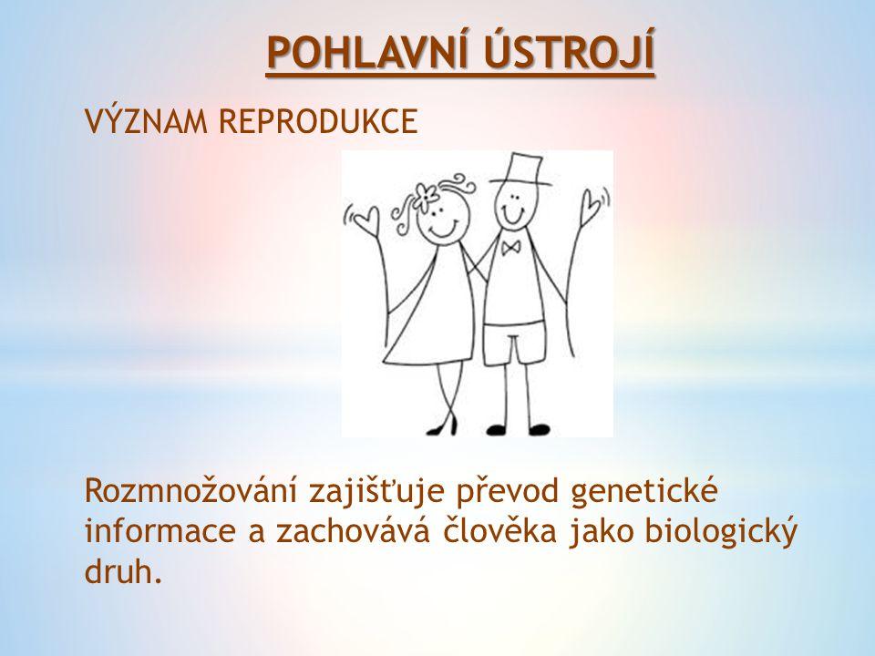 POHLAVNÍ ÚSTROJÍ VÝZNAM REPRODUKCE Rozmnožování zajišťuje převod genetické informace a zachovává člověka jako biologický druh.