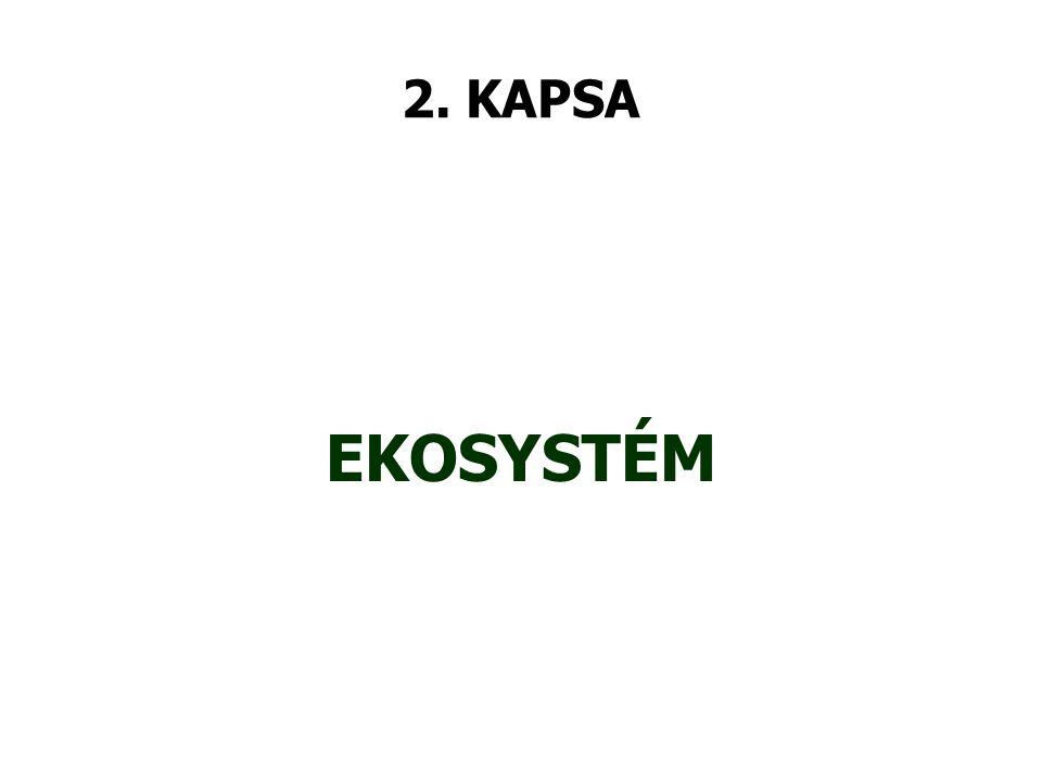 3. KAPSA JEDNOBUNĚČNÝ ORGANISMUS