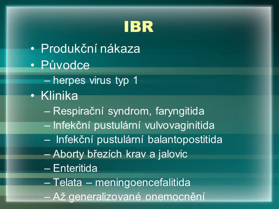 IBR Produkční nákaza Původce –herpes virus typ 1 Klinika –Respirační syndrom, faryngitida –Infekční pustulární vulvovaginitida – Infekční pustulární b
