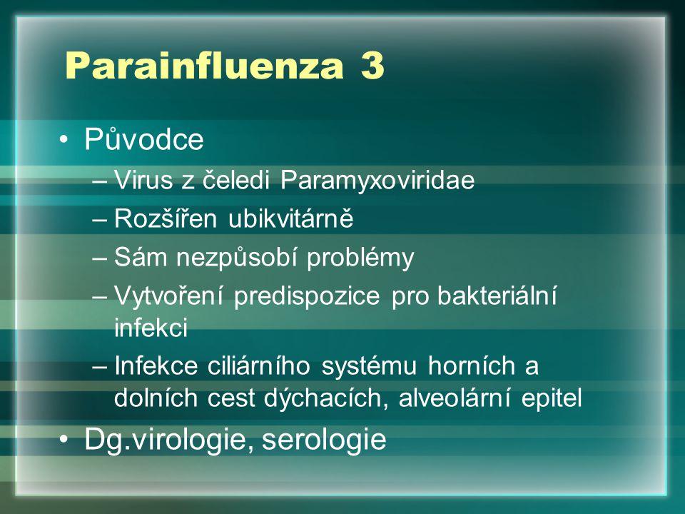 Parainfluenza 3 Původce –Virus z čeledi Paramyxoviridae –Rozšířen ubikvitárně –Sám nezpůsobí problémy –Vytvoření predispozice pro bakteriální infekci