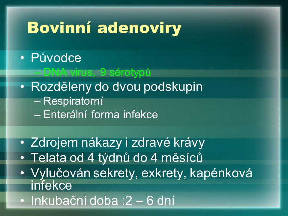 Bovinní adenoviry Původce –DNA virus, 9 sérotypů Rozděleny do dvou podskupin –Respiratorní –Enterální forma infekce Zdrojem nákazy i zdravé krávy Tela