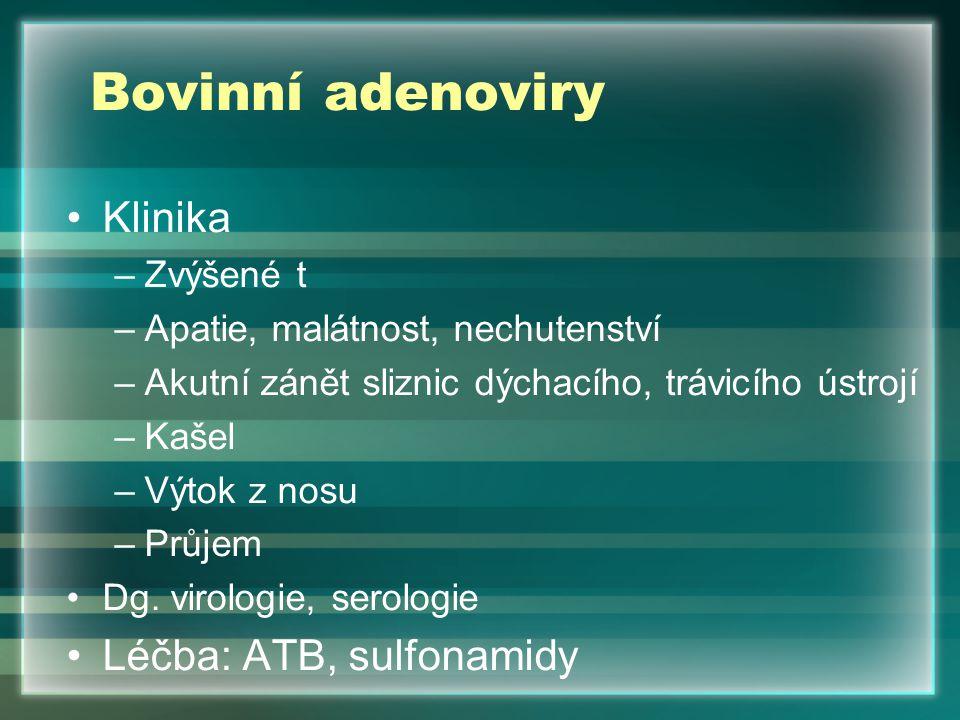 Bovinní adenoviry Klinika –Zvýšené t –Apatie, malátnost, nechutenství –Akutní zánět sliznic dýchacího, trávicího ústrojí –Kašel –Výtok z nosu –Průjem