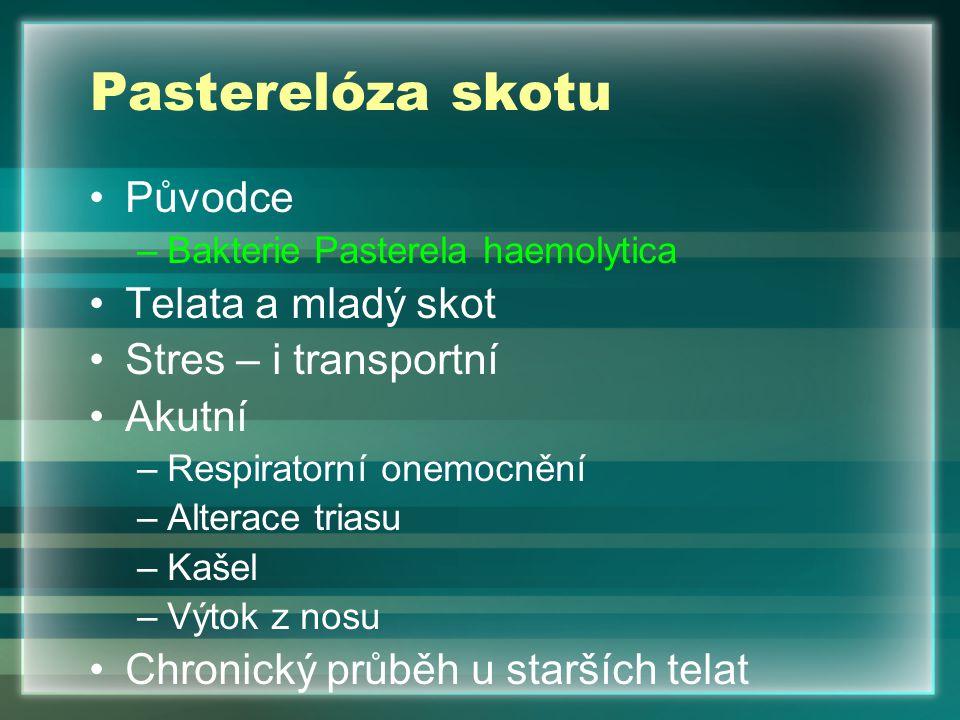 Pasterelóza skotu Původce –Bakterie Pasterela haemolytica Telata a mladý skot Stres – i transportní Akutní –Respiratorní onemocnění –Alterace triasu –