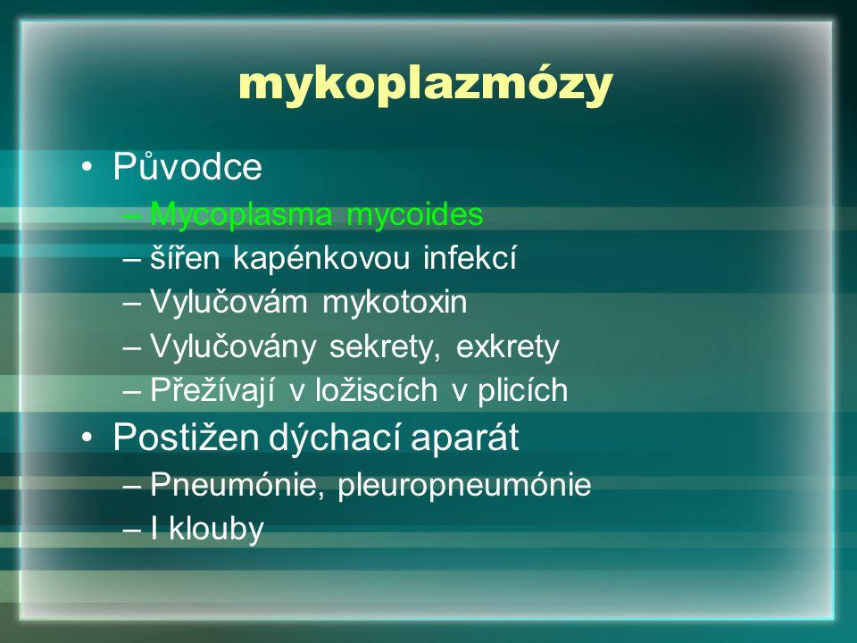 mykoplazmózy Původce –Mycoplasma mycoides –šířen kapénkovou infekcí –Vylučovám mykotoxin –Vylučovány sekrety, exkrety –Přežívají v ložiscích v plicích
