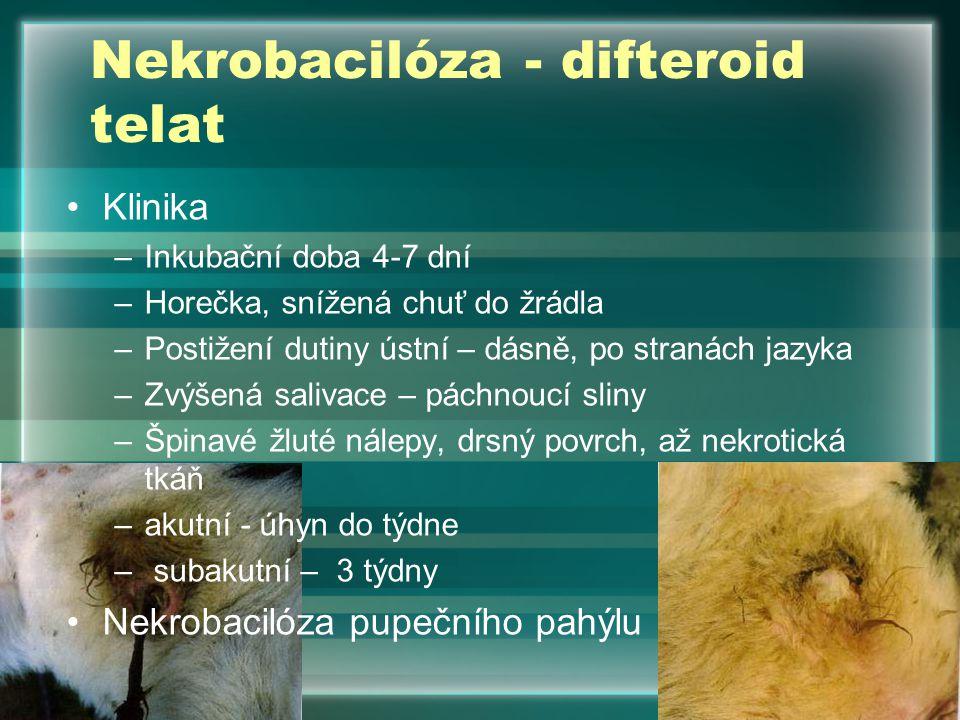 Klinika –Inkubační doba 4-7 dní –Horečka, snížená chuť do žrádla –Postižení dutiny ústní – dásně, po stranách jazyka –Zvýšená salivace – páchnoucí sli