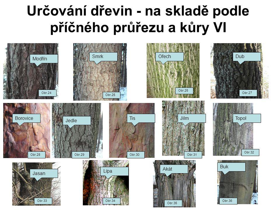 Určování dřevin - na skladě podle příčného průřezu a kůry VI Obr.24 Modřín Smrk Obr.25 Obr.27 DubOřech Obr.26 Jedle Obr.29 Lípa Obr.34 Buk Obr.36 Obr.