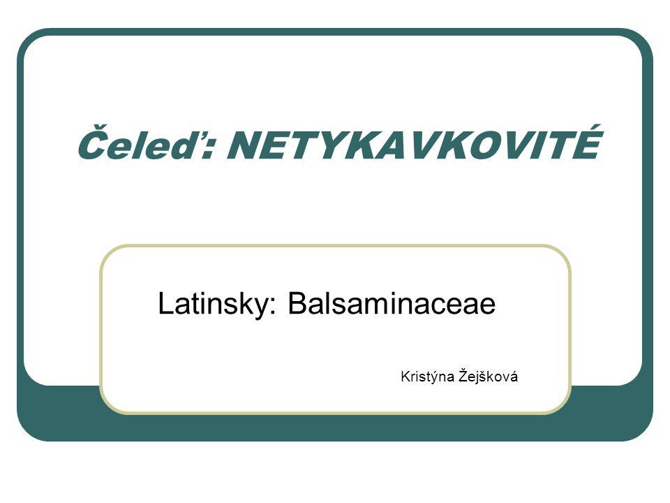 Čeleď: NETYKAVKOVITÉ Latinsky: Balsaminaceae Kristýna Žejšková