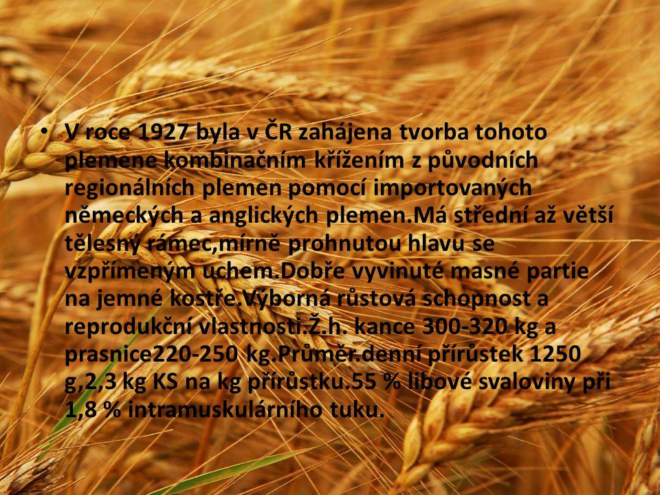 V roce 1927 byla v ČR zahájena tvorba tohoto plemene kombinačním křížením z původních regionálních plemen pomocí importovaných německých a anglických
