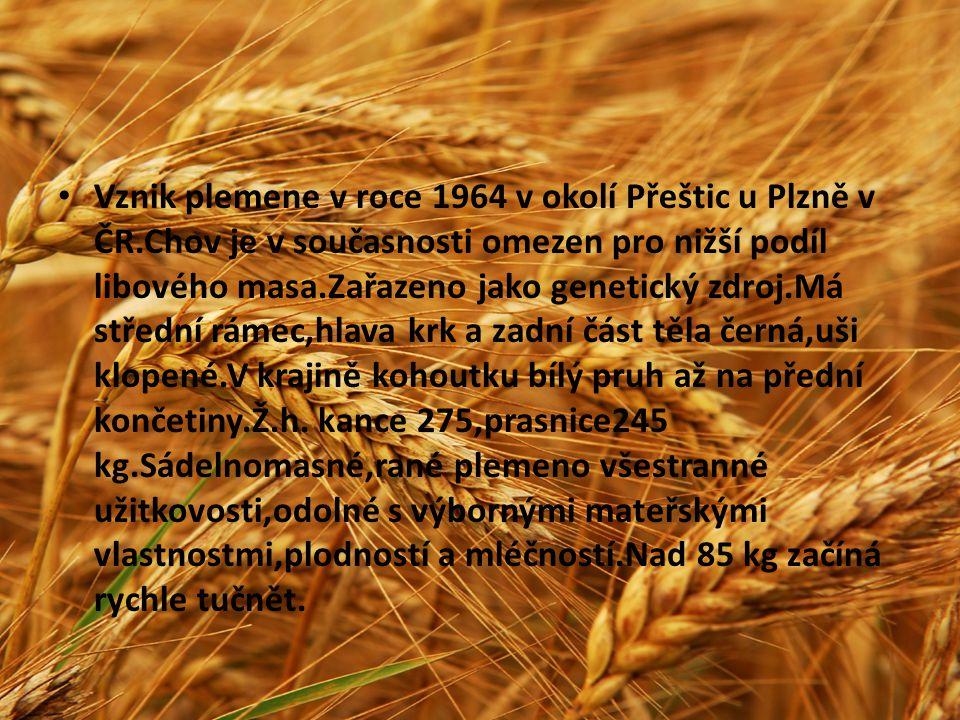 Vznik plemene v roce 1964 v okolí Přeštic u Plzně v ČR.Chov je v současnosti omezen pro nižší podíl libového masa.Zařazeno jako genetický zdroj.Má stř