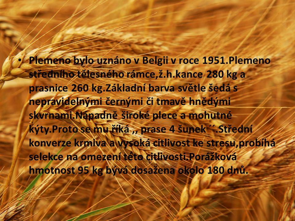 Plemeno bylo uznáno v Belgii v roce 1951.Plemeno středního tělesného rámce,ž.h.kance 280 kg a prasnice 260 kg.Základní barva světle šedá s nepravideln