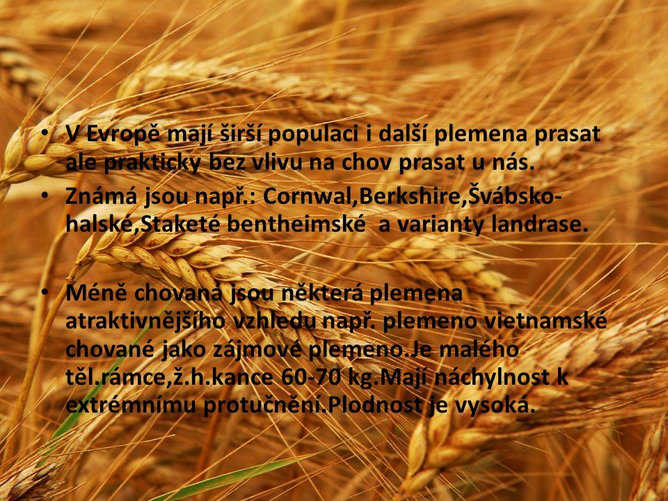 V Evropě mají širší populaci i další plemena prasat ale prakticky bez vlivu na chov prasat u nás. Známá jsou např.: Cornwal,Berkshire,Švábsko- halské,