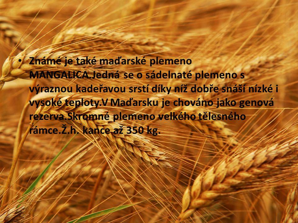 Známé je také maďarské plemeno MANGALICA.Jedná se o sádelnaté plemeno s výraznou kadeřavou srstí díky níž dobře snáší nízké i vysoké teploty.V Maďarsk