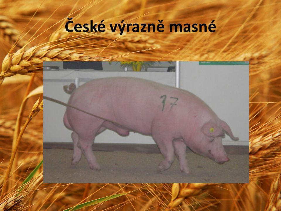 České výrazně masné