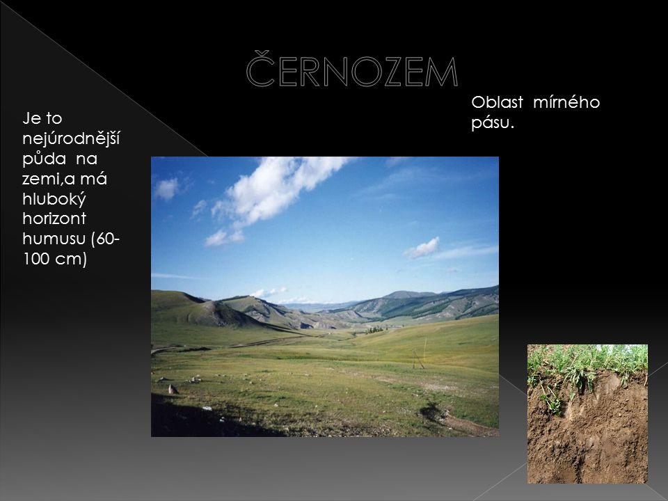 Oblast mírného pásu. Je to nejúrodnější půda na zemi,a má hluboký horizont humusu (60- 100 cm)