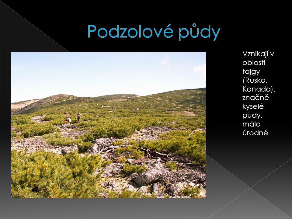 Vznikají v oblasti tajgy (Rusko, Kanada), značně kyselé půdy, málo úrodné