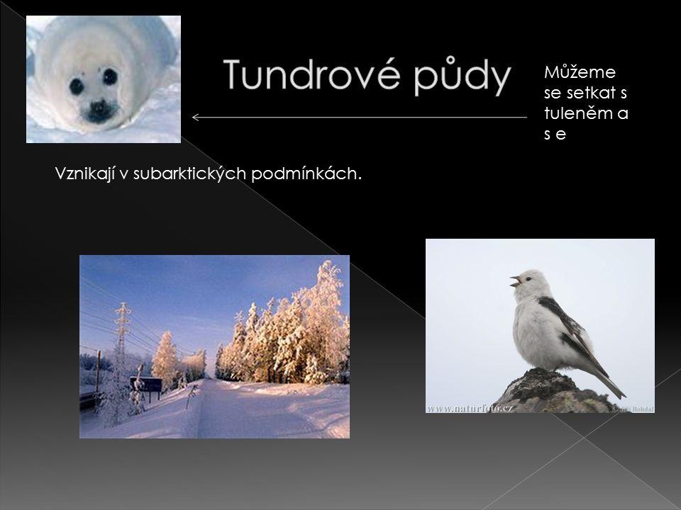 Vznikají v subarktických podmínkách. Můžeme se setkat s tuleněm a s e