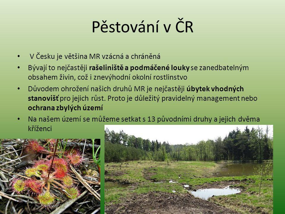 Pěstování v ČR V Česku je většina MR vzácná a chráněná Bývají to nejčastěji rašeliniště a podmáčené louky se zanedbatelným obsahem živin, což i znevýh