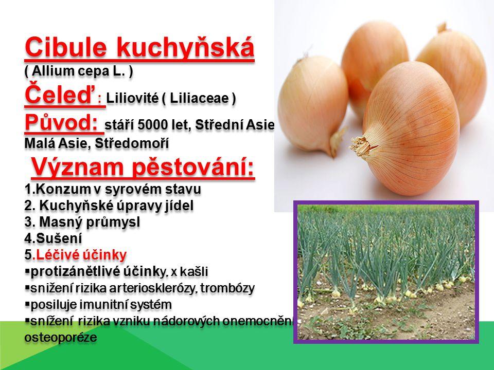 Cibule kuchyňská ( Allium cepa L.