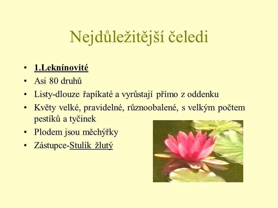 Nejdůležitější čeledi 2.Pryskyřníkovité Květní části vyrůstají na prodlouženém květním lůžku Květy jsou oboupohlavné,pravidelné a souměrné Přítomnost jedovatých látek (alkaloidů) Zamokřené louky (Pryskyřník prudký,Upolín nejvyšší), prameniště (Blatouch bahenní), travnaté stráně (Hlaváček jarní,Koniklec),lesy (Sasanka hajní,Orsej jarní)