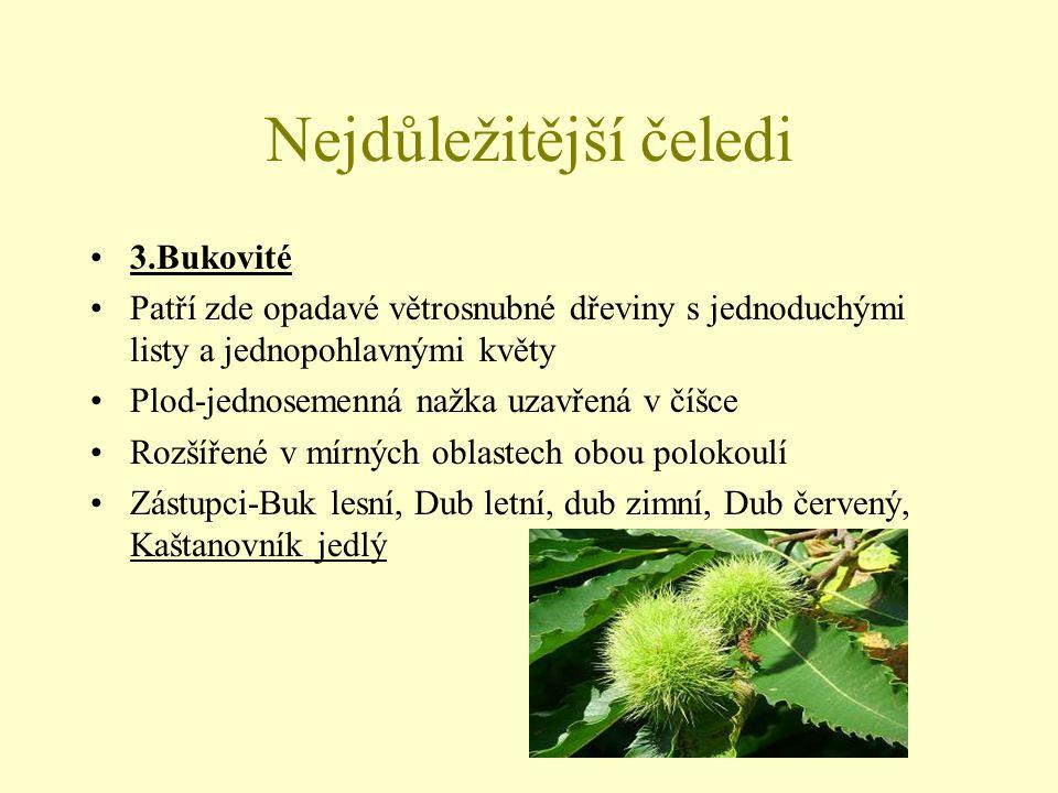 Nejdůležitější čeledi 4.Břízovité Jsou to větrosnubné rostliny s jednoduchými střídavými listy,plodem je nažka Drobné květy mají silně redukované okvětí a jsou uspořádány v jehnědovitých skupenstvích Zástupci-Olše lepkavá, Olše šedá